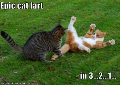 Epic cat fart