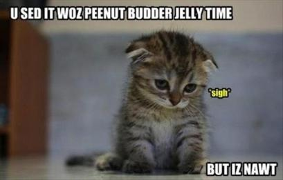 peanut-butter-jelly-time-kitten