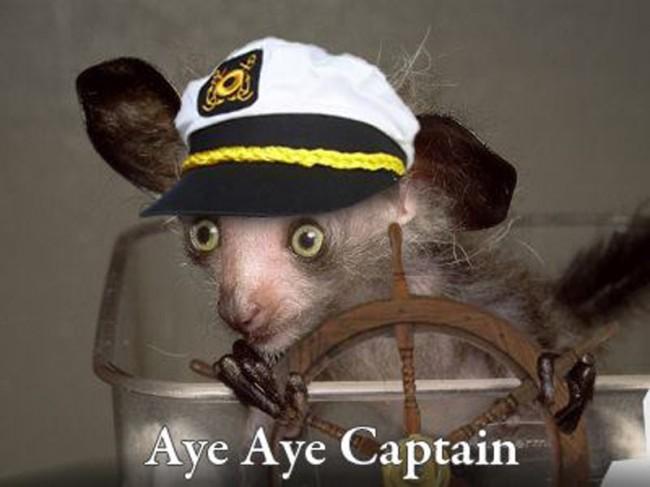 aye-aye-captain.jpg