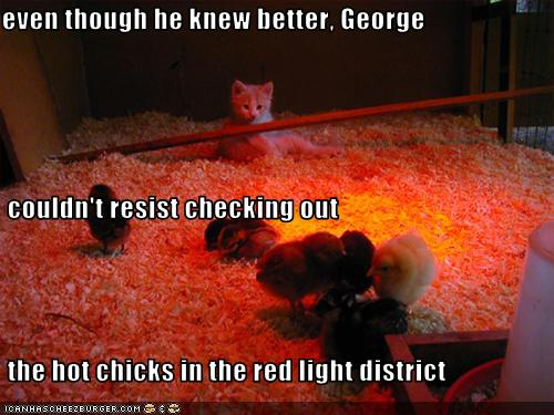 red-light-district-chicks