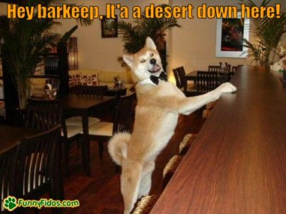 funny-dog-picture-hey-barkeep