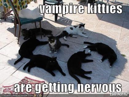 Vampire Kitties