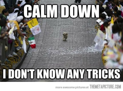 funny-dog-tricks-parade