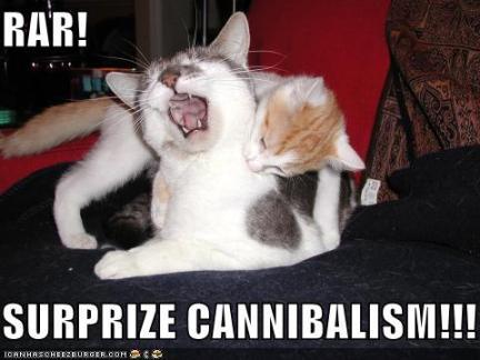 cat-cannibalism