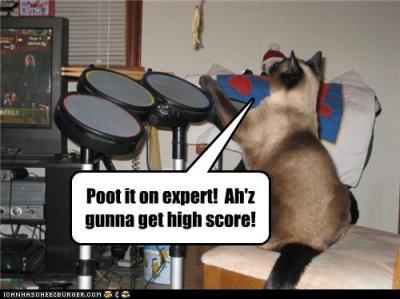 cat-plays-rock-band