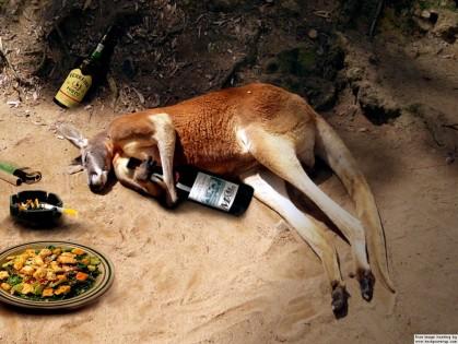 Kangaroo Drinking