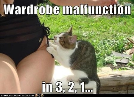 Wardrobe Malfunction Cat