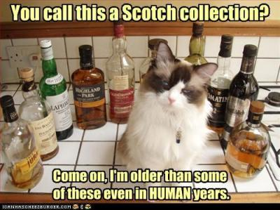 Cat Scotch