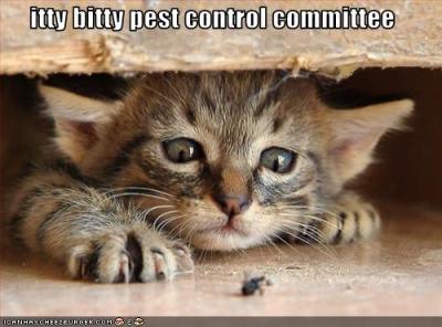 cat_controls_bugs