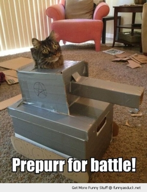 cat-battle