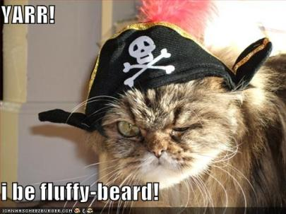 pirate-cat