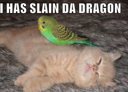 slain da dragon