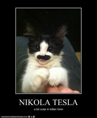 Tesla Kitten