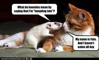 Fate Cat