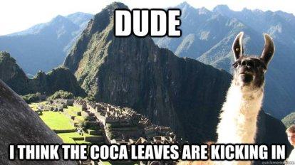 coca leaves llama