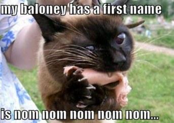 Balogna Cat