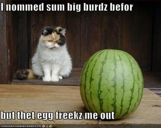 Cat Watermelon