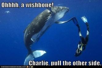 human wishbone
