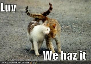 Love-we haz it