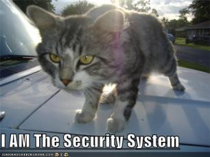 cat security system