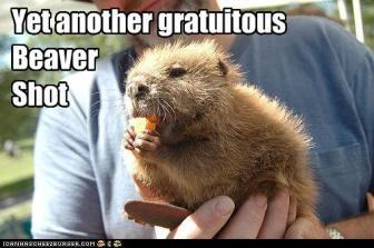 gratuitous beaver shot