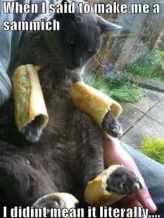 cat sandwich