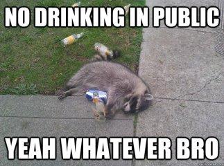 Drinking in Public Racoon