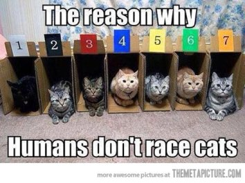 funny-seven-cats-boxes