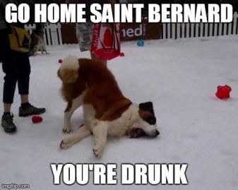 St. Bernard Drunk
