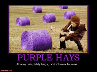 purple hays