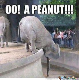elephant peanut