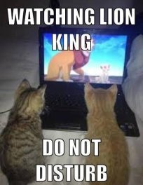cats watching lion king