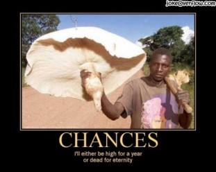 chances-with-mushroom