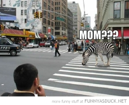 zebra-crosswalk