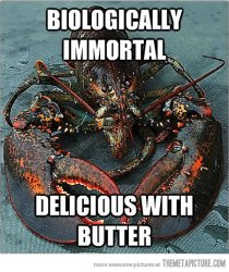 lobster delicious with butter