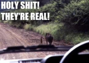 Timon and Pumbaa Real