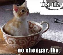 Tea Kitty