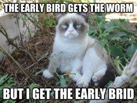 Early Bird Grumpy Cat