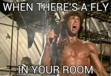 rambo-fly-in-room
