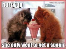 cats-with-milkshake