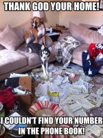 Dogs Phonebook