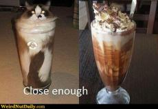 Close Enough Cat.jpg