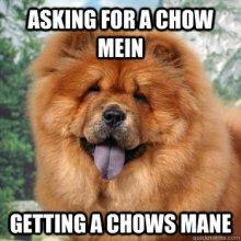 Chows Mane