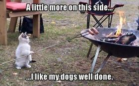 Cat with Hotdogs