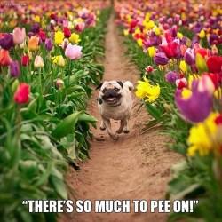 tulips dog