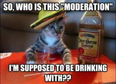 moderation cat