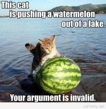 cat-watermelon.jpg