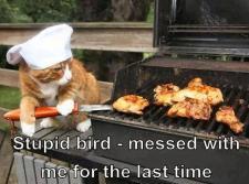 Cat BBQ
