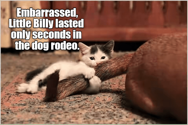 Kitty Rodeo