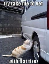 cat flat tire